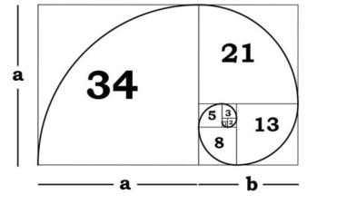 fibonacci golden rectangle
