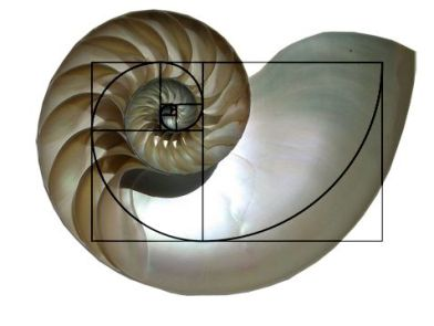 nautilus rectangle.jpg